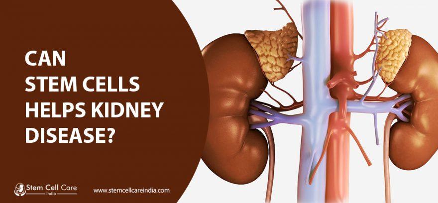 Can stem cells help kidney disease?