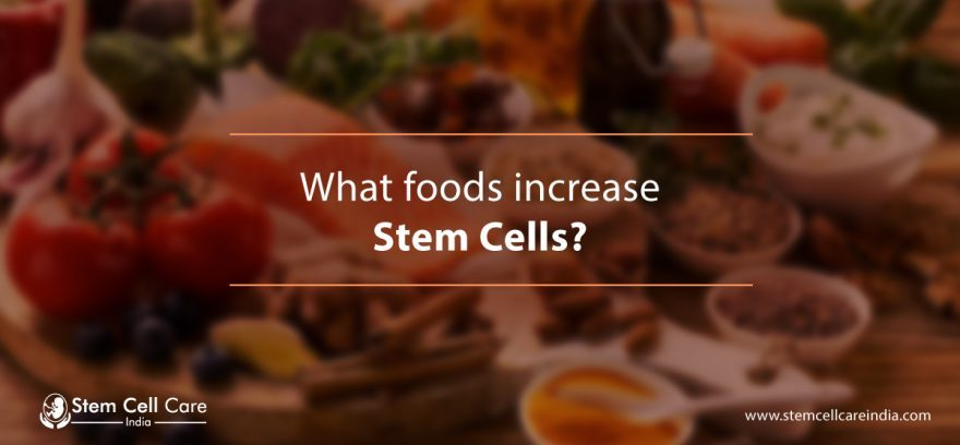 What Foods Increase Stem Cells?